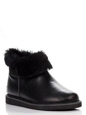 Півчобітки чорні | 3773510