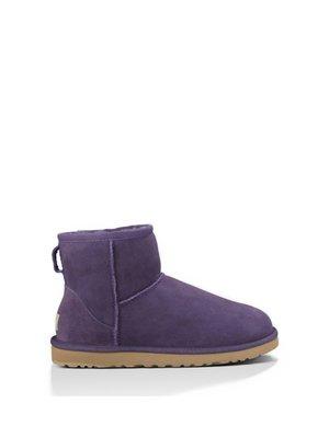 Півчобітки фіолетові | 3540498