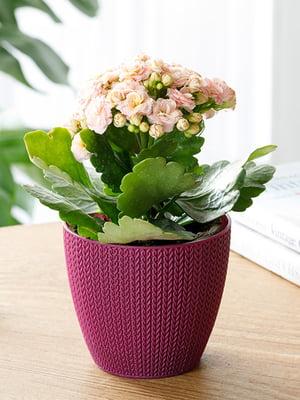 Горшок для цветов (0.5 л) | 5532972