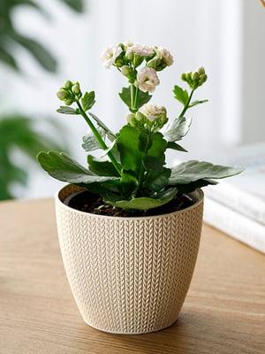 Горшок для цветов (0.5 л) | 5532973