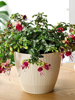 Горшок для цветов (2.5 л) | 5532974