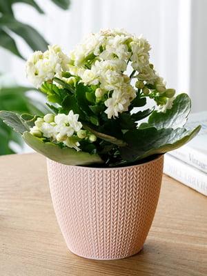 Горшок для цветов (0.5 л) | 5532977
