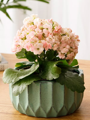 Горшок для цветов (16х16х8 см) | 5532980
