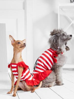 Сукня в смужку з аплікацією для собак маленьких порід   5775437