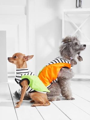 Футболка в смужку для собак маленьких порід   5775440