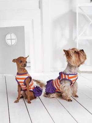 Сукня триколірна в смужку для собак маленьких порід   5775441