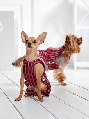 Комбінезон рожевий в смужку для собак маленьких порід   5775442