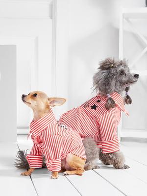Сукня для собак   5836859
