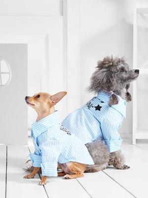 Сукня для собак   5836860