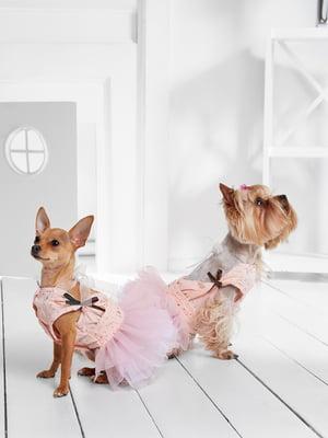 Сукня для собак   5836861