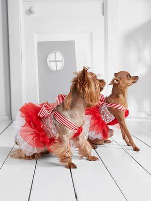Сукня для собак   5836864