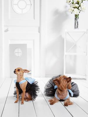 Сукня для собак   5836865