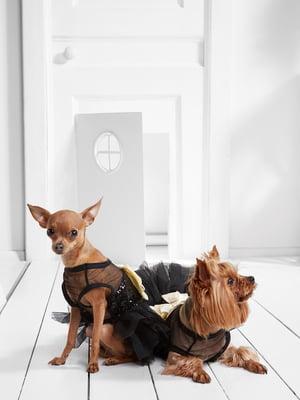 Сукня для собак   5836869