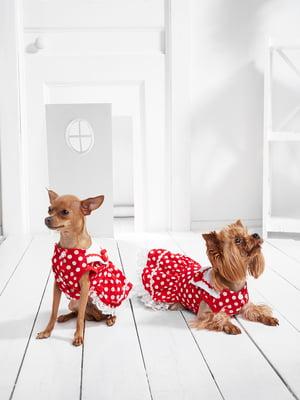 Сукня для собак   5836883